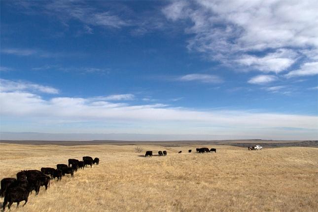 Orella Road Pasture, Sioux County